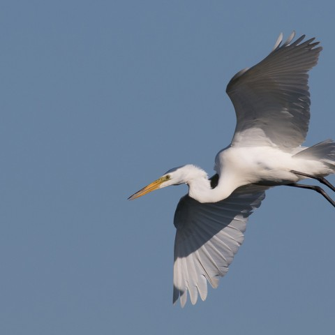 a bird soars over the Delaware Bay