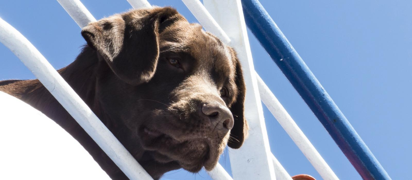 Why Pets Love Riding The Ferry